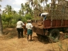 coconut-farm-2